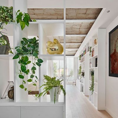 Garden room: por qué llenar una habitación de plantas será la próxima tendencia