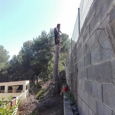 Tala de árboles de difícil acceso, Barcelona