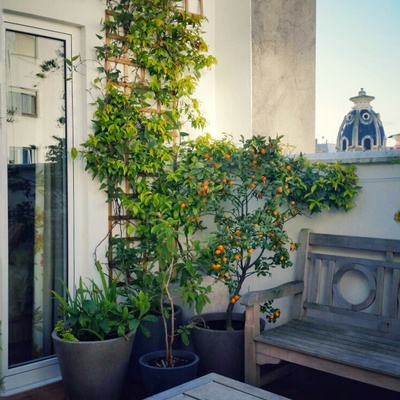 Un jardín frondoso en un ático de ciudad