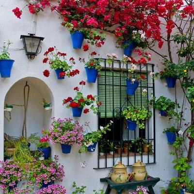 terraza con plantas coloridas