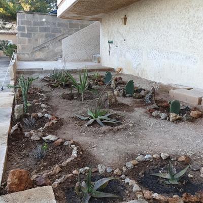 Zona de  cactus