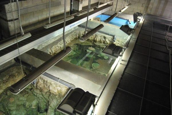 acuario-sin-peces-1024x685