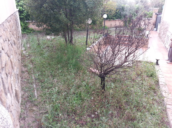 Foto estado incial 4 de plantea jardiner a y paisajismo for Jardineria y paisajismo fotos