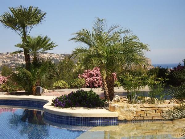 Foto mantenimiento de piscina y poda de ejemplares de for Guia mantenimiento piscinas