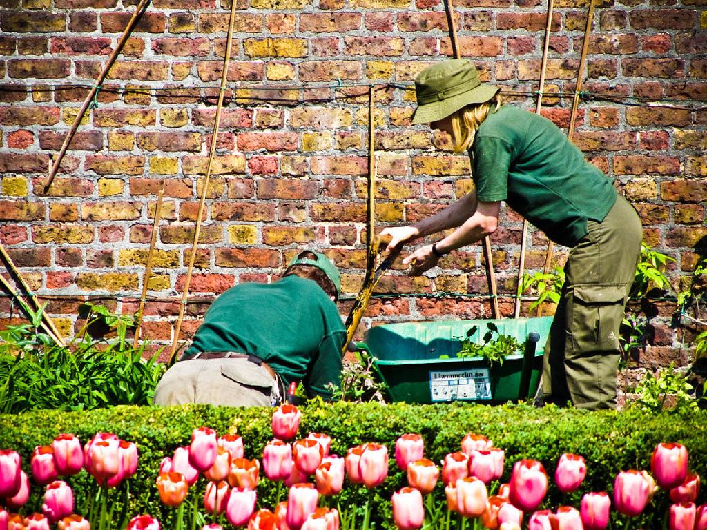 Crea tu propio huerto en casa y presume de jard n for Crea tu jardin