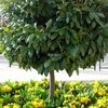 Jardineros En Palau Solita i Plegamans