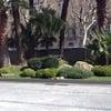 Arreglar Un Jardin Lleno De Arbustos Y Sembrar Cesped Y Poner Las Piedras En El Suleo Que Ya Tenemos