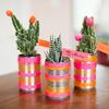 cactusplacecards