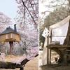 Ideas para construir una casa del árbol