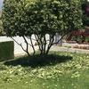 Dale una forma a tu jardin