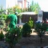 Despues de plantar, montando el riego por goteo