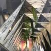 Detalle colocación techo