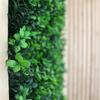Detalle Deco Vegetal