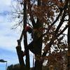 Eliminación del tronco
