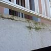 Estado previo de terraza