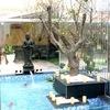 Fuente Buda y Cois Japoneses