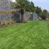 Sacar palmeras jardin