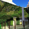 Jardín vertical creciendo