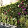 Diseñar Jardin vertical