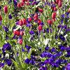 Asesoramiento jardinería y plantación