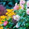 Trabajos puntuales de jardineria por horas