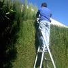 Jardineria Poda de setos