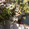 Jardinería terraza.