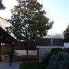 Mantenimiento jardín , ( Magnolio )