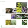 Mapa de especies botánicas