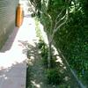 Plantación jardineras y zonas arbustias