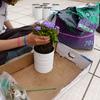 Plantar las macetas