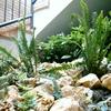Plantas y piedra decoración
