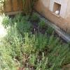 Puesta a punto de jardinera, limpieza y colocación de plantas