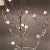 Ramas y estrellas