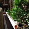 reforma y cerramiente de jardin