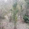 Selección árboles a eliminar