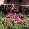 Tratamientos fitosanitarios para parques y jardines