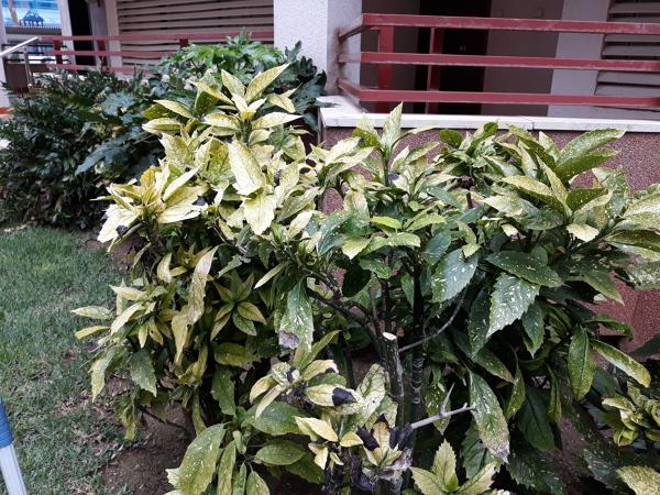 ¿Qué mes es mejor para podar estas plantas?