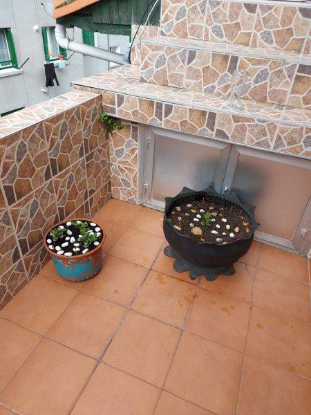 ¿Puedo tener un alcornoque mini en mi terraza?