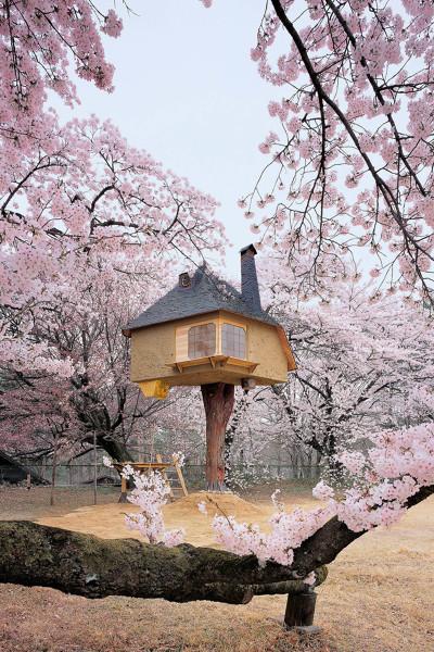¿Cómo hacer una casita del árbol?