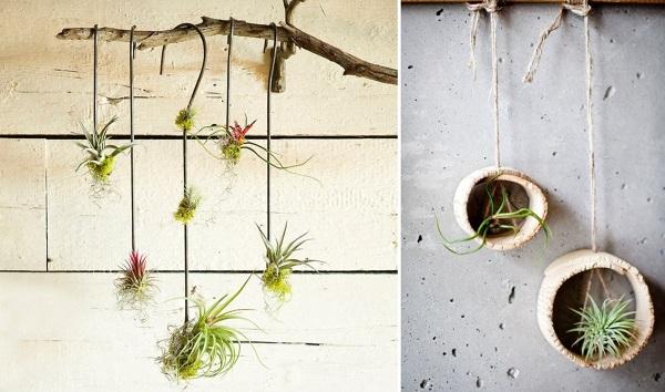 D nde puedo comprar esta planta en huelva habitissimo for Donde venden plantas