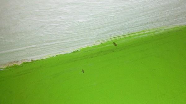 ¿Qué son unos bichitos que crecen en paredes con humedad y como resolver ese problema?