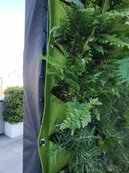 ¿En qué época debería plantar un jardín vertical?