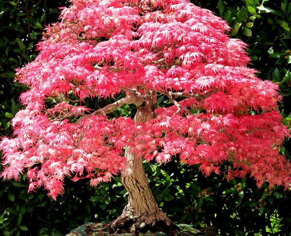¿Dónde puedo encontrar un árbol del estilo de la foto?