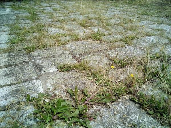 ¿Cómo quitar malas hierbas?