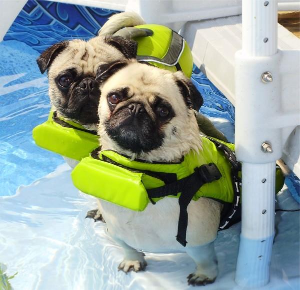 Salvavidas para mascota habitissimo for Piscina para perro