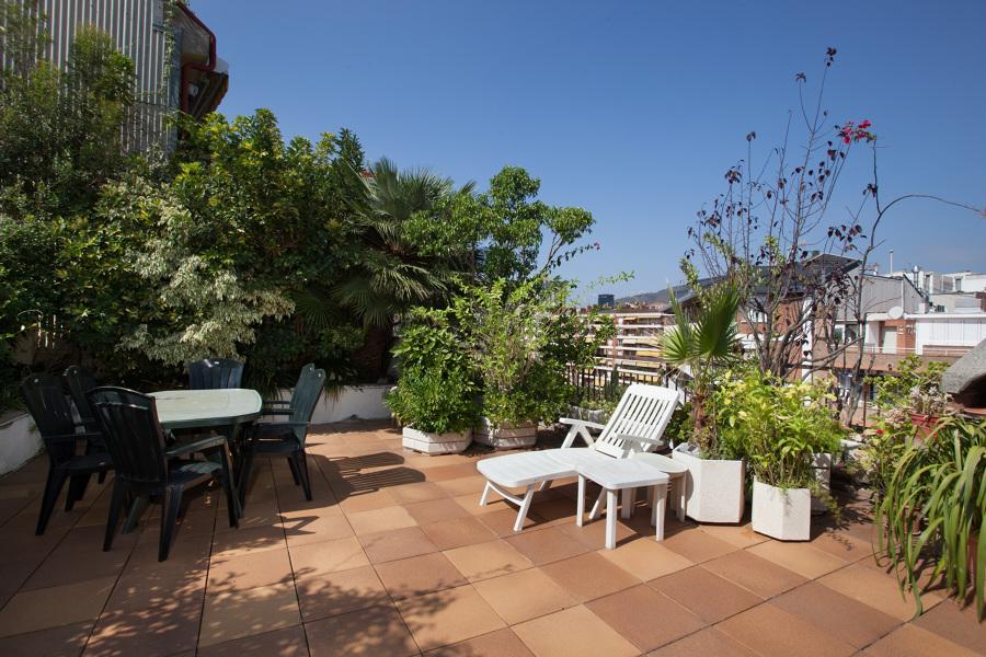 Cortar las raices de los rboles y plantas de la terraza - Arboles terraza ...
