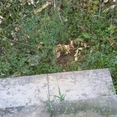 Arreglar jardin desbrozar podar y quitar arbustos for Arreglar jardin