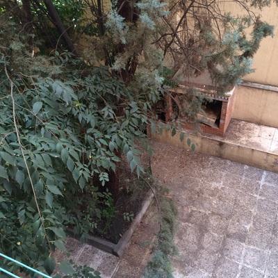 Poda rbol patio de vecinos madrid madrid habitissimo - Poda de arboles madrid ...