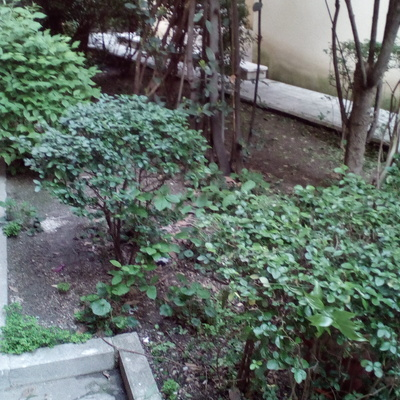 Reforma jard n comunidad de vecinos san blas madrid - Disenar jardin online ...